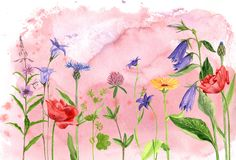 Watercolor drawing flowers and plants Stock Images