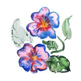 Watercolor drawing of fresh flowers aquarelle painting.  Stock Images