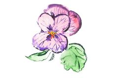 Watercolor drawing of fresh flowers aquarelle painting.  vector illustration