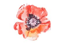 Watercolor drawing of fresh flowers aquarelle painting.  Royalty Free Stock Image