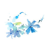 Watercolor drawing of fresh garden flowers, summer meadow bouquet aquarelle painting.  Royalty Free Stock Photos