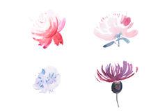 Watercolor drawing of fresh garden flowers, summer meadow bouquet aquarelle painting Royalty Free Stock Photos