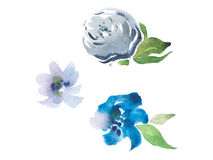 Watercolor drawing of fresh garden flowers, summer meadow bouquet aquarelle painting Stock Photo