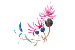 Watercolor drawing of fresh garden flowers, summer meadow bouquet aquarelle painting.  stock illustration