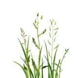 Watercolor drawing green grass stock photo