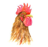 Watercolor drawing head of cock Stock Photography
