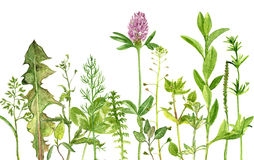 Watercolor drawing herbs and flowers Stock Photography