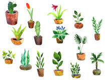 Watercolor drawing home plants. Hand drawn llustration Royalty Free Stock Images