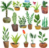 Watercolor drawing home plants. Hand drawn vector illustration Stock Photos