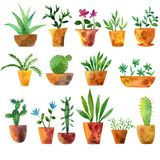 Watercolor drawing home plants. Watercolor drawing house plants, cacti and succulents, hand drawn illustration Royalty Free Stock Photo
