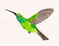 Watercolor drawing of hummingbird Royalty Free Stock Images