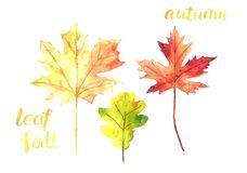 Watercolor drawing of leaves. Yellow, orange and red leaves. royalty free illustration