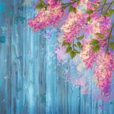 Watercolor Drawing of Lilac. Watercolor drawing branches of lilac on wooden background Stock Images