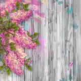 Watercolor Drawing of Lilac Royalty Free Stock Photography