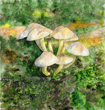 Watercolor drawing. Mushrooms in the forest on the grass. Stock Images