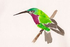 Watercolor Drawing Of Hummingbird Stock Photos