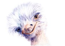Watercolor drawing of an ostrich stock illustration