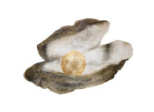 Watercolor drawing of Pearl Royalty Free Stock Image