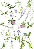 Watercolor drawing plants Stock Photos