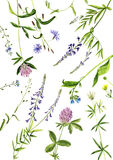 Watercolor drawing plants Stock Images