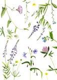 Watercolor drawing plants Royalty Free Stock Photo