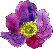 Watercolor drawing purple flower Stock Photography