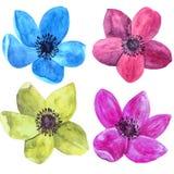 Watercolor drawing roses Stock Image