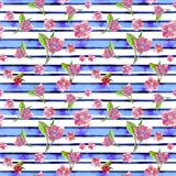 Watercolor drawing seamless pattern on the theme of spring, female day, summer, sakura flowers against the background of pink stri royalty free stock images