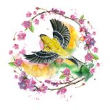 Watercolor drawing seamless pattern on the theme of spring, heat, illustration of a bird of a sparrow-like fleet of Orioles flying. With open wings, feathers Royalty Free Stock Photography
