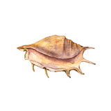 Watercolor drawing shell Stock Photography