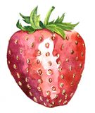Watercolor drawing strawberry Royalty Free Stock Photo