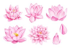 Beautiful Pink Lotus Flowers. Watercolor illustration. Pure Water Blossom. Watercolor drawing. Summer Illustration. Summer symbol. Sunny day. Yoga, Zen royalty free illustration