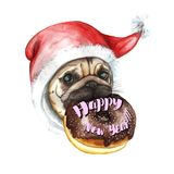A watercolor drawing on the theme of the new year and the birth, a dog of the pug breed in a santa cap wearing a donut holding a d Royalty Free Stock Image