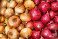 Watercolor drawing yellow and red onions stock photos