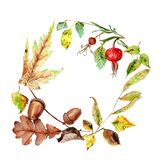 Watercolor drawings of autumn leaves, chestnut, acorn, dog rose. stock illustration