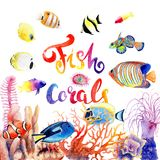 Watercolor drawings of bright fish and corals. Composition Stock Photo