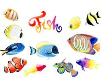 Watercolor drawings of bright fish. Watercolor drawings of bright red sea fish set Royalty Free Stock Photo
