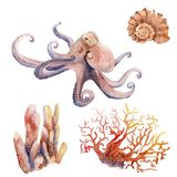 Watercolor drawings on the marine theme - octopus, coral, shell stock photo
