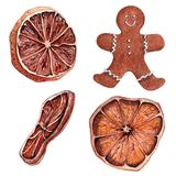 Watercolor dried orange. Watercolor dried orange with gingerbread. Christmas colorful decorations and sweets Royalty Free Stock Image