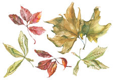 Watercolor dry autumn leaves