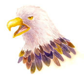 Watercolor Eagle. An illustration of an eagle, done by watercolor Royalty Free Stock Images