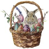 Watercolor easter card. Hand painted basket with colored eggs, bunny, lavender, tulip, willow and tree branch isolated. On white background. Holiday print for stock illustration