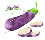 Watercolor eggplant Royalty Free Stock Images