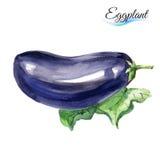 Watercolor eggplant Stock Photo