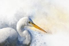 Watercolor Egret. Hand Drawn Watercolor Heron Perfect For Design Greeting Card Or Print Royalty Free Stock Photo