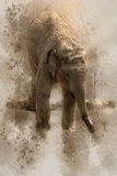 Watercolor elephant. Watercolor little elephant shot in ZOO 2016 Stock Photos