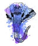 Watercolor elephant portrait on white background. Hand sketch grunge illustration. Stock Images