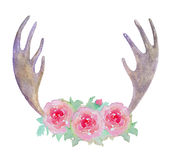 Watercolor Elk Antlers and Pink Roses isolated on white background. Royalty Free Stock Photo