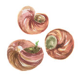 watercolor escargot. Royalty Free Stock Photos