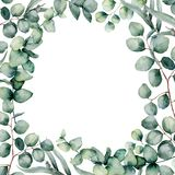 Watercolor eucaliptus leaves frame. Hand painted baby, seeded and silver dollar eucalyptus branch isolated on white. Background. Floral illustration for design royalty free illustration